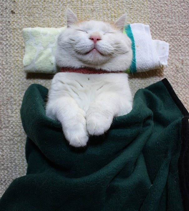 This Must Be The Happiest Cat Ever