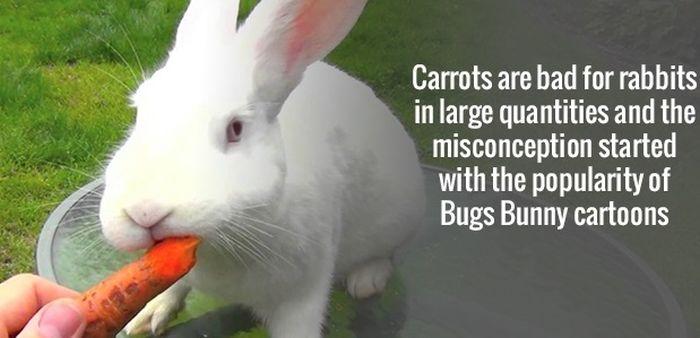 Strange Facts 11