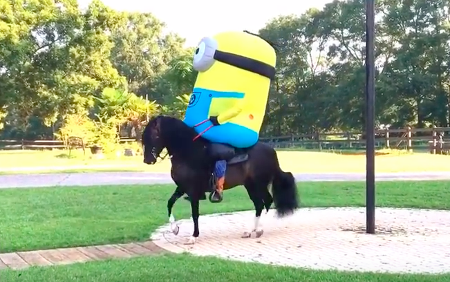 Funniest Video This Year? Minion On A Horse!